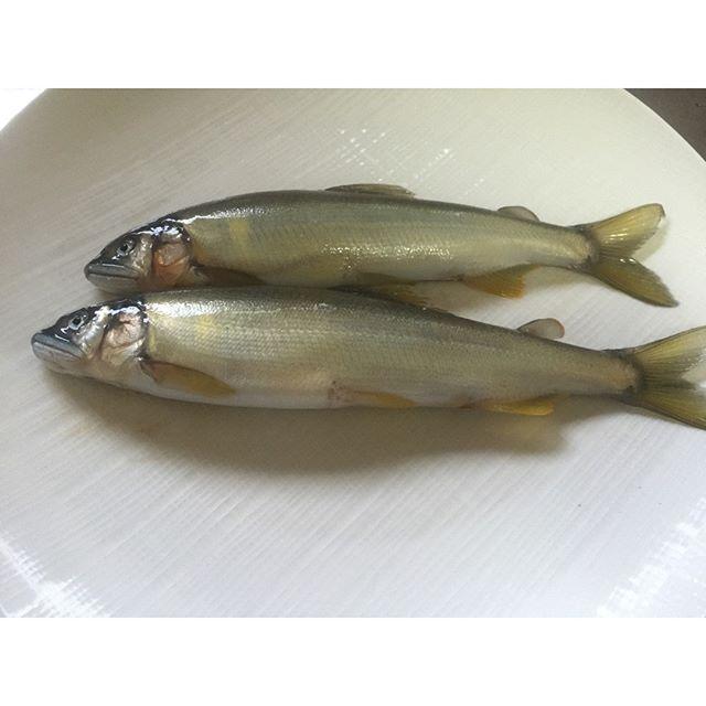 鮎の美味しい季節