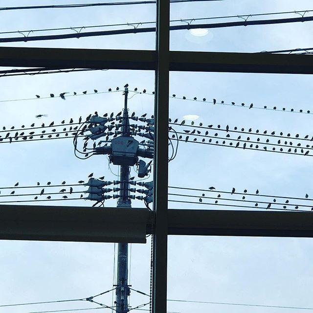 旦那のスマホが壊れたので機種変でショップへ。窓の外を見ると、スズメが会議中? (Instagram)