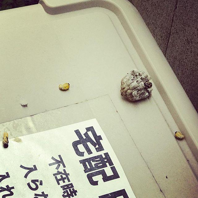 郵便をとりにいったら、宅配ボックスに蜂の巣がコロリ。これはどこから来たのだろう。 (Instagram)