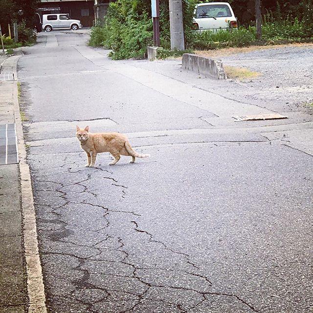 夕暮れ時隣の猫と「だるまさんがころんだ」タイム (Instagram)