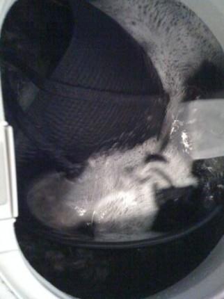 洗濯中 回る