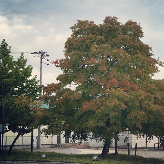 駅前の木が色づきはじめました (Instagram)