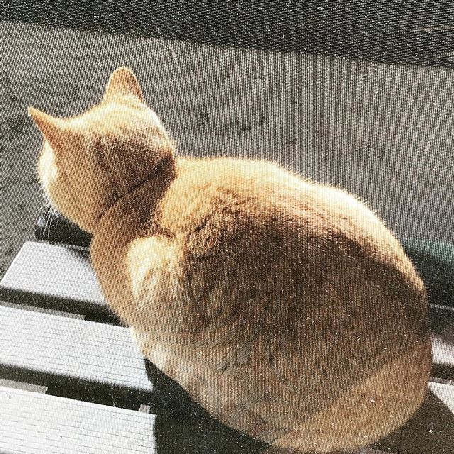 隣の家ネコは我が家のベランダで丸くなるのが日課 (Instagram)