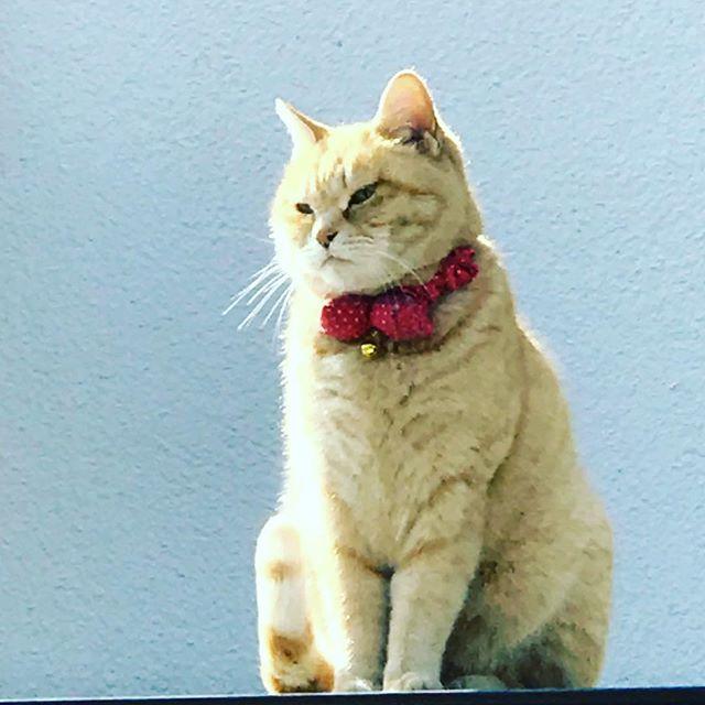 本日も良い陽射しでござる#猫屋根の上より (Instagram)